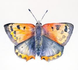 Tutorial Acuarela – Mariposa Manto Bicolor con Véronique Baur